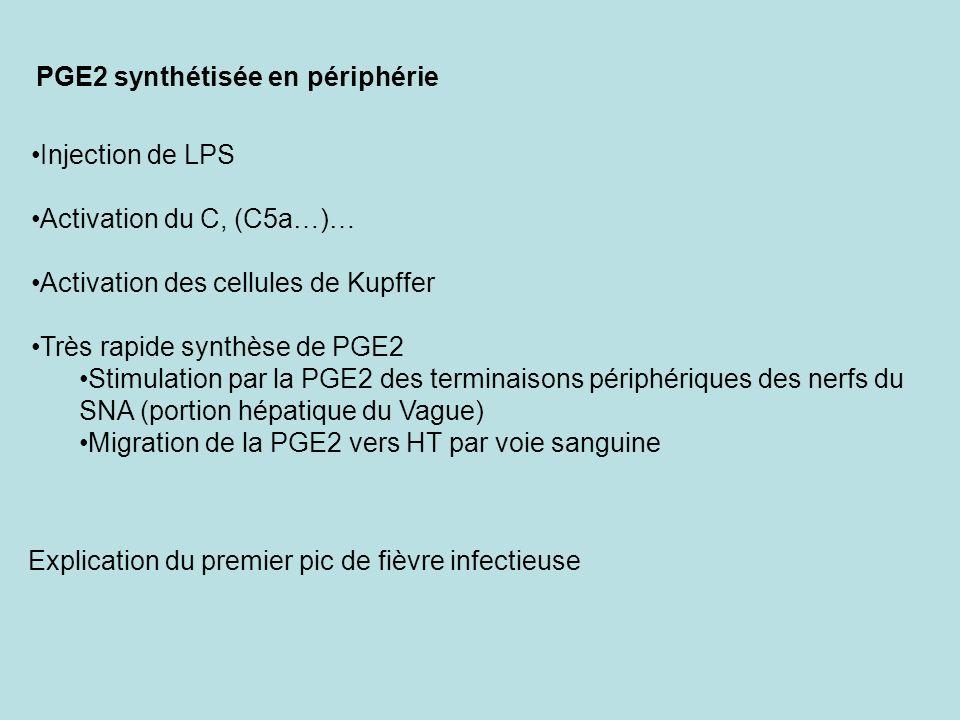PGE2 synthétisée en périphérie