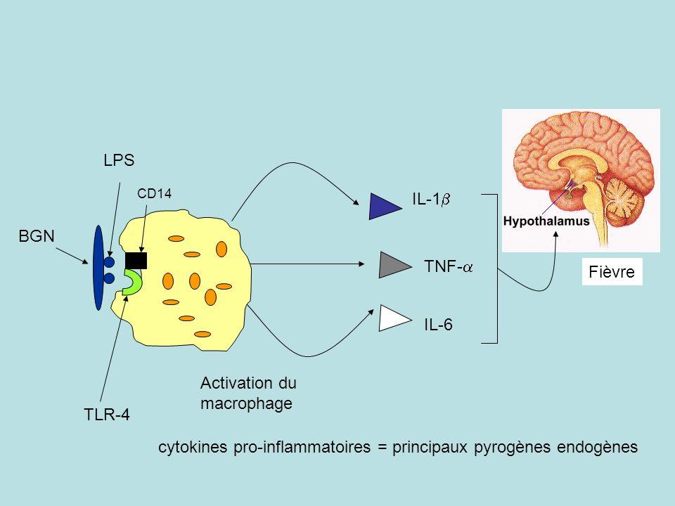 cytokines pro-inflammatoires = principaux pyrogènes endogènes TLR-4