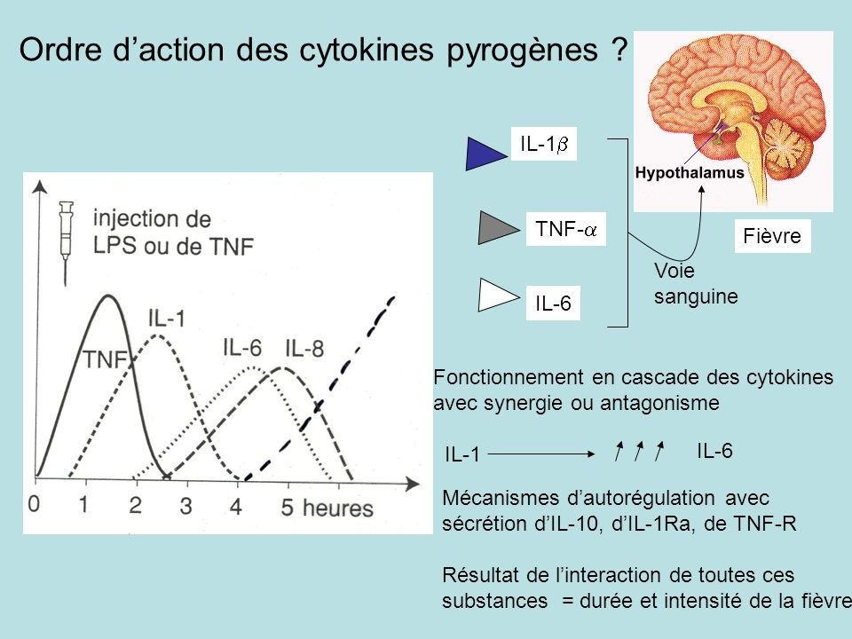 Ordre d'action des cytokines pyrogènes