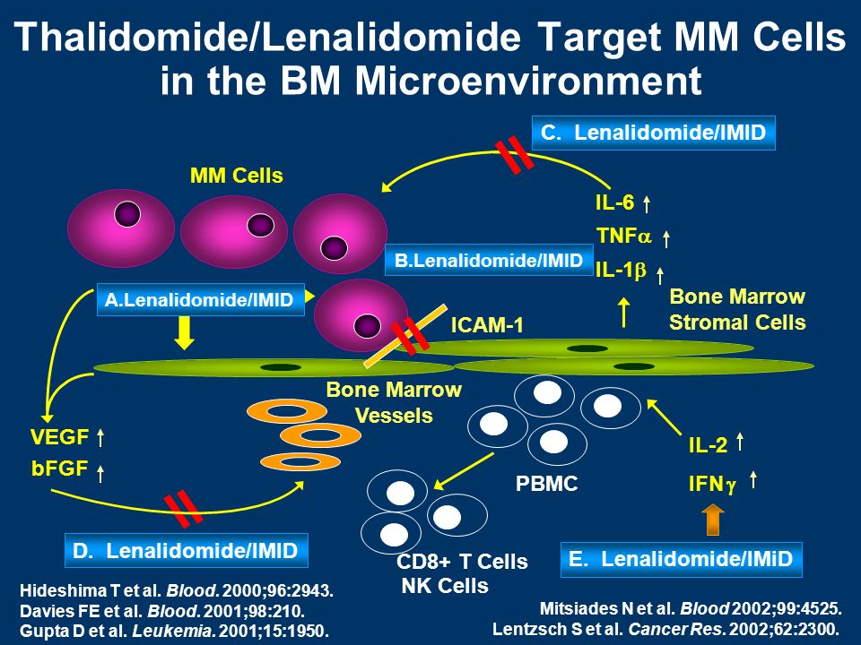 Thalidomide/Lenalidomide Target MM Cells in the BM Microenvironment
