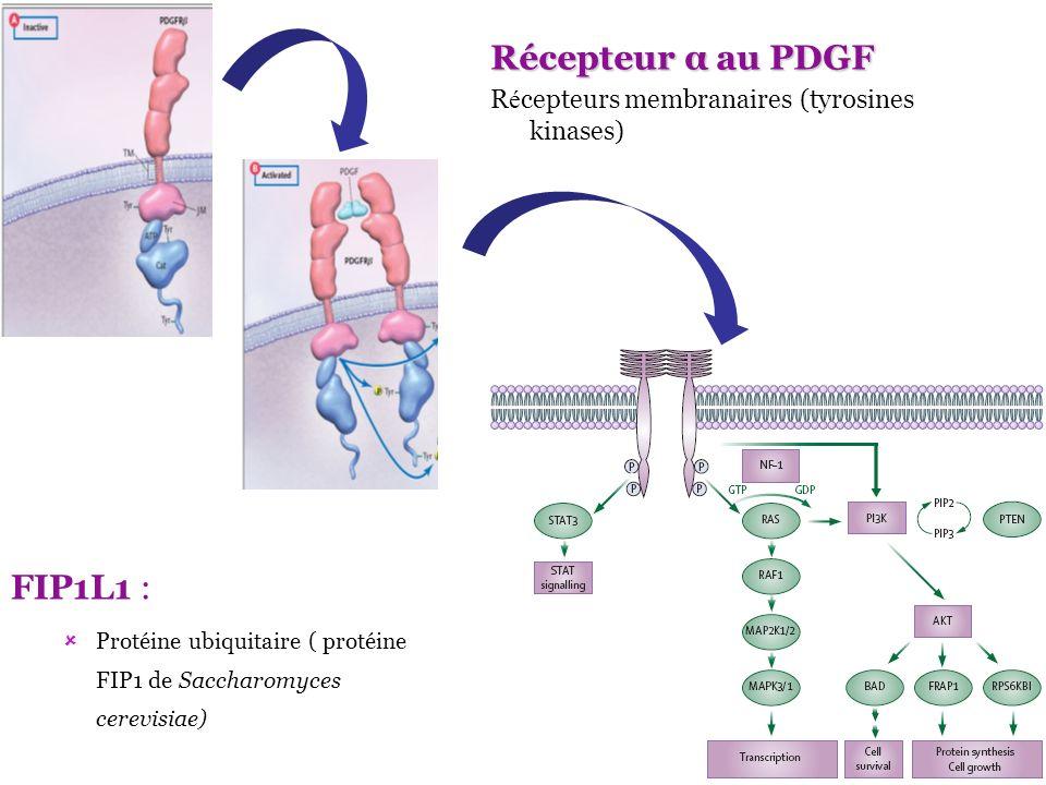 Récepteur α au PDGF FIP1L1 :