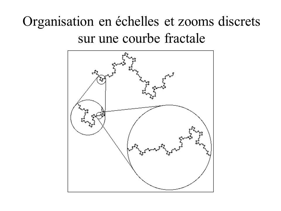 Organisation en échelles et zooms discrets sur une courbe fractale