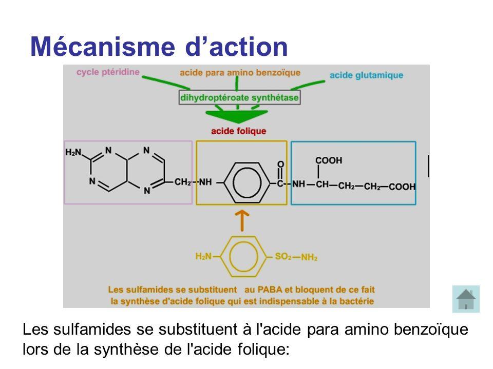 Mécanisme d'action Les sulfamides se substituent à l acide para amino benzoïque.