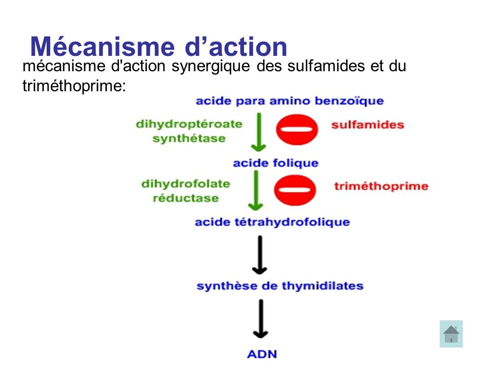 Mécanisme d'action mécanisme d action synergique des sulfamides et du triméthoprime: