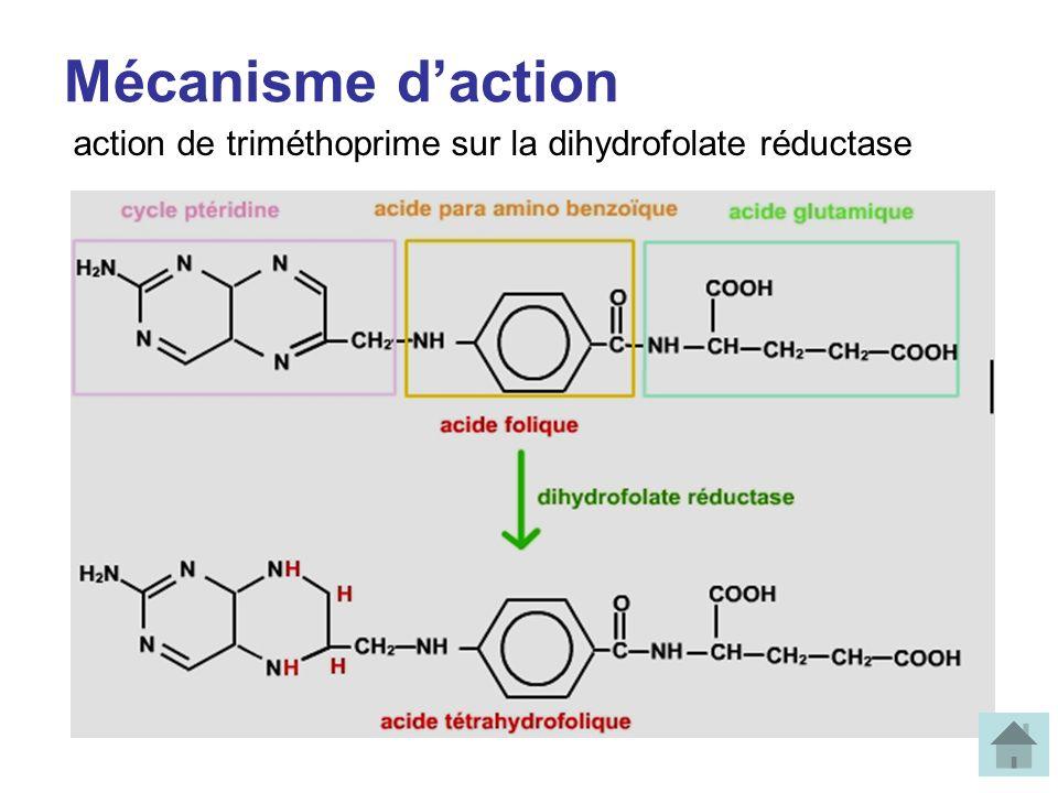 Mécanisme d'action action de triméthoprime sur la dihydrofolate réductase