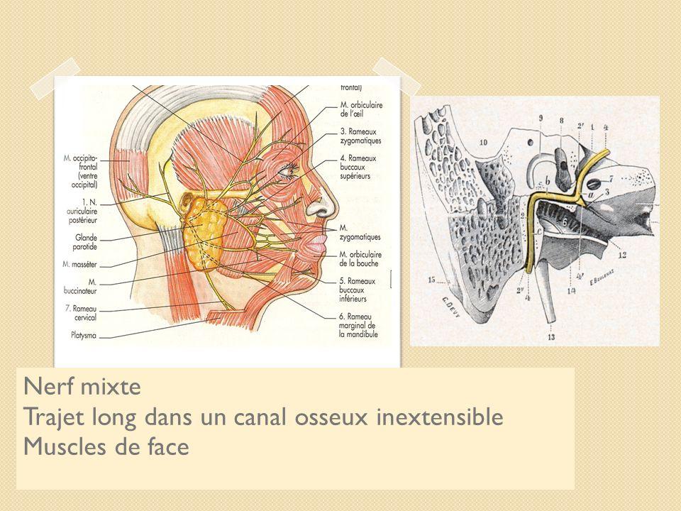 Le nerf facial Nerf mixte
