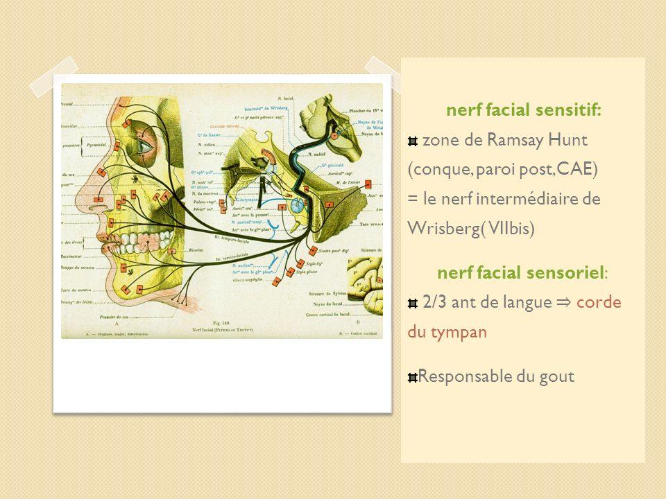 nerf facial sensoriel: