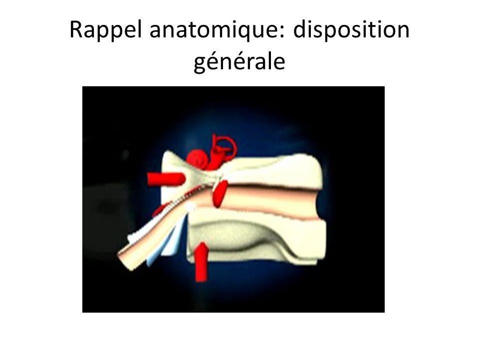 Rappel anatomique: disposition générale