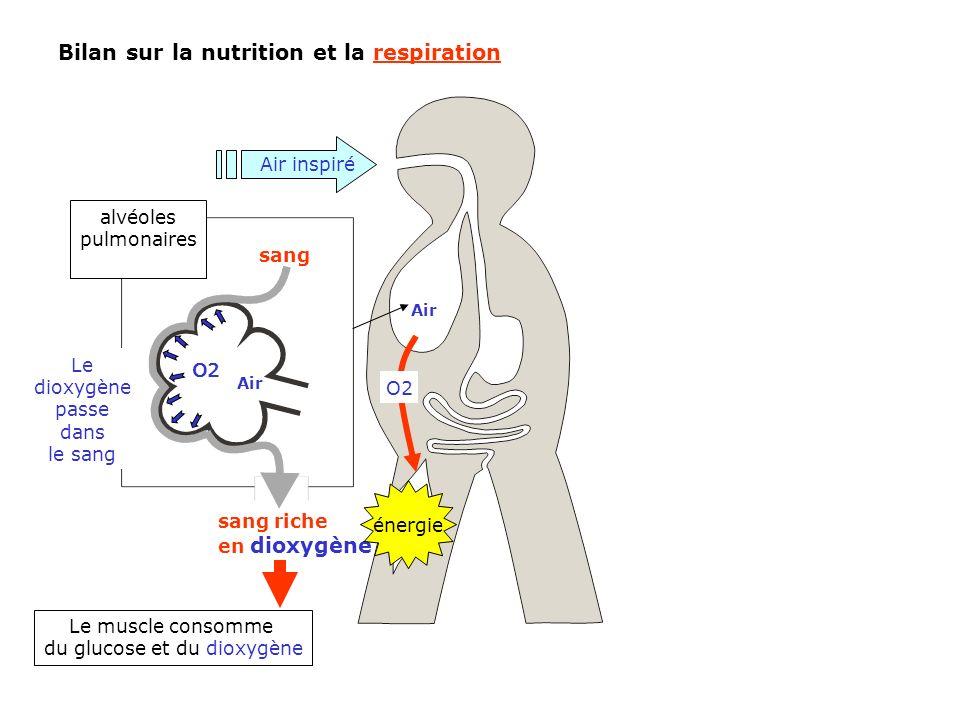 du glucose et du dioxygène
