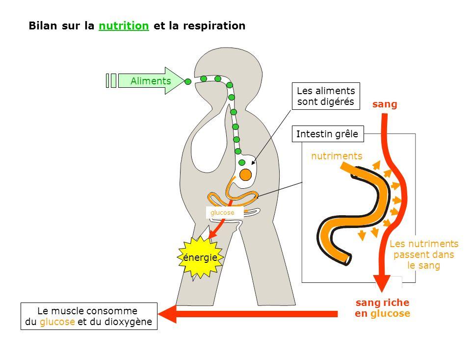 Bilan sur la nutrition et la respiration
