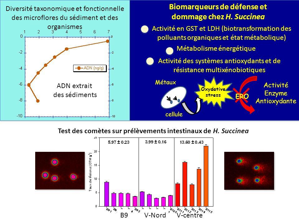 Biomarqueurs de défense et dommage chez H. Succinea
