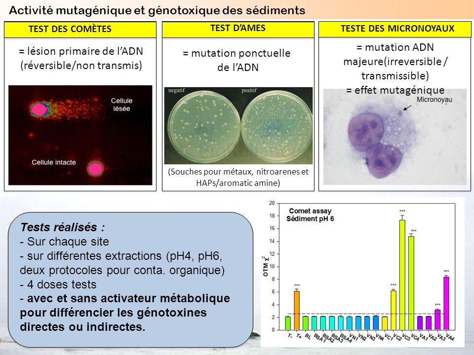 Activité mutagénique et génotoxique des sédiments