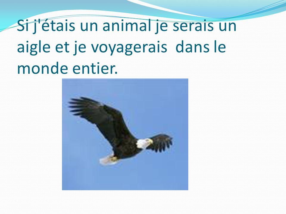 Si j étais un animal je serais un aigle et je voyagerais dans le monde entier.