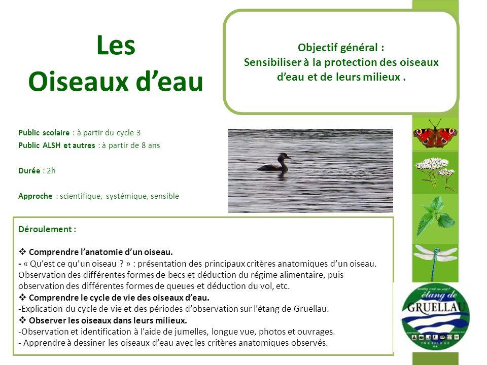 Sensibiliser à la protection des oiseaux d'eau et de leurs milieux .