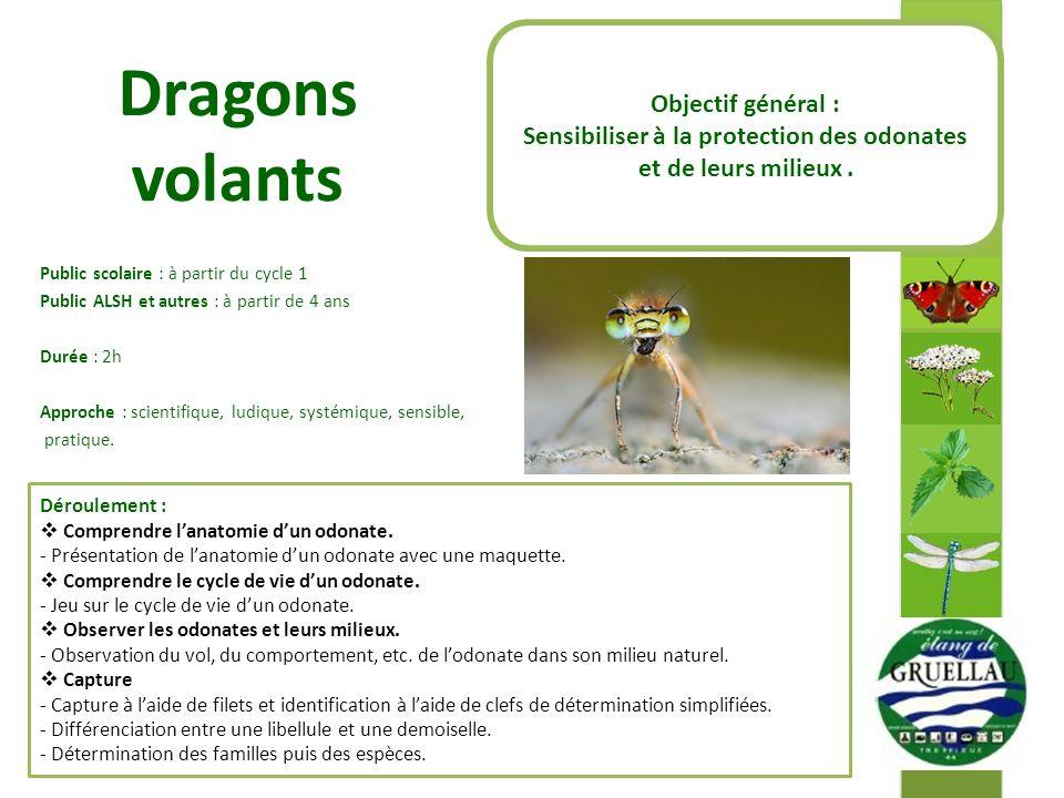 Sensibiliser à la protection des odonates et de leurs milieux .