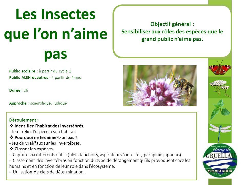 Les Insectes que l'on n'aime pas