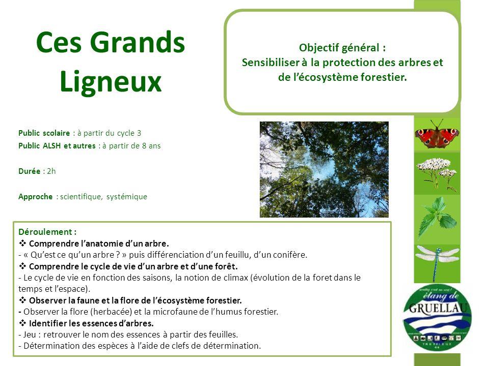 Sensibiliser à la protection des arbres et de l'écosystème forestier.