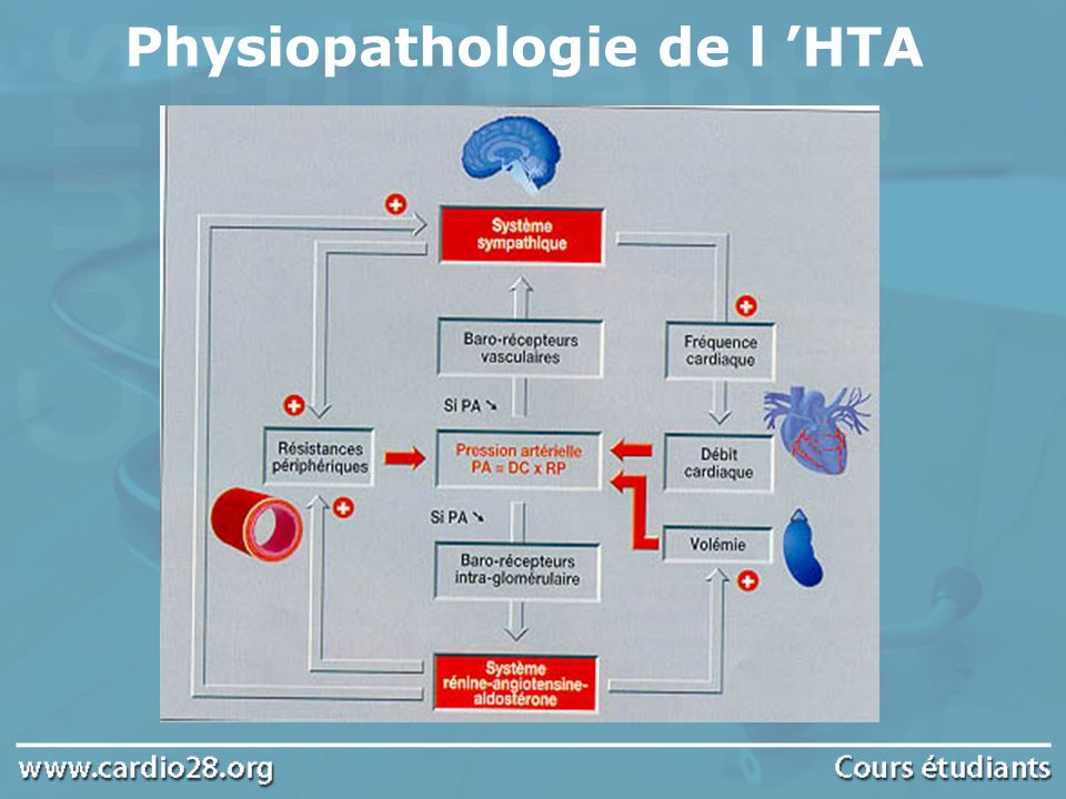 Physiopathologie de l 'HTA