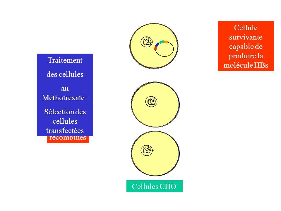 Cellule survivante capable de produire la molécule HBs