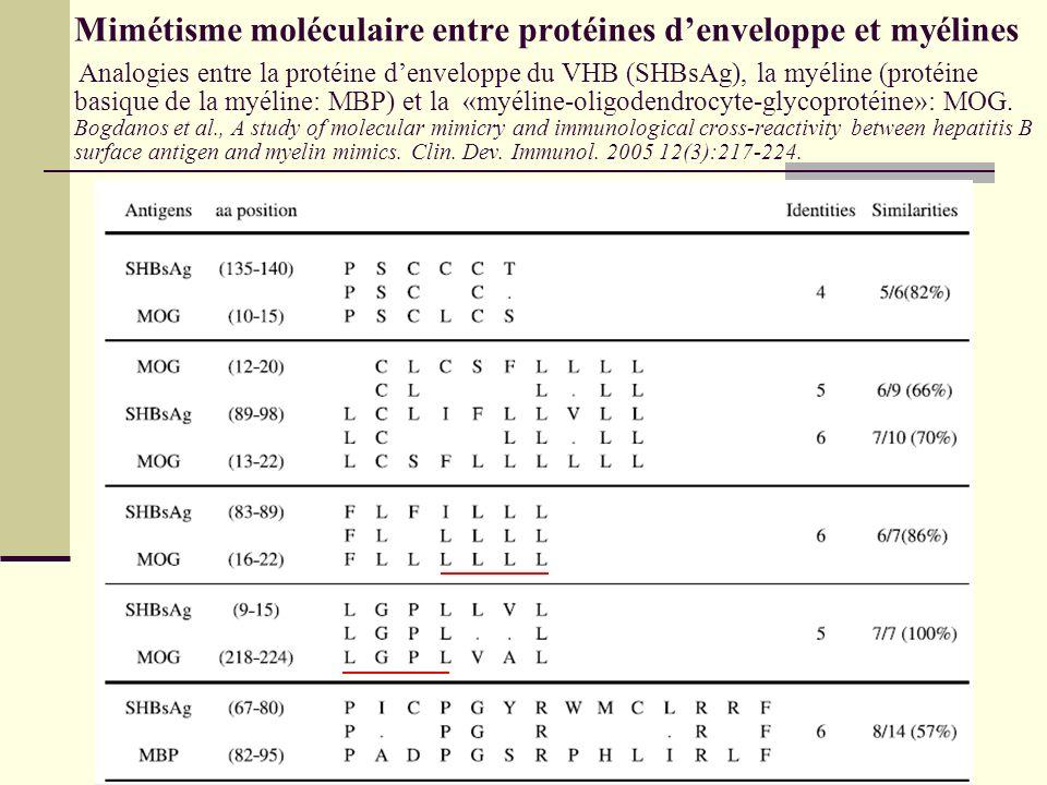 Mimétisme moléculaire entre protéines d'enveloppe et myélines Analogies entre la protéine d'enveloppe du VHB (SHBsAg), la myéline (protéine basique de la myéline: MBP) et la «myéline-oligodendrocyte-glycoprotéine»: MOG.