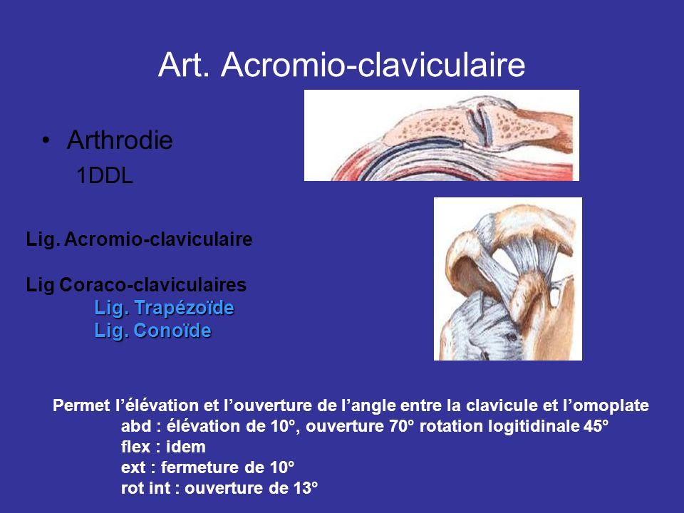 Art. Acromio-claviculaire
