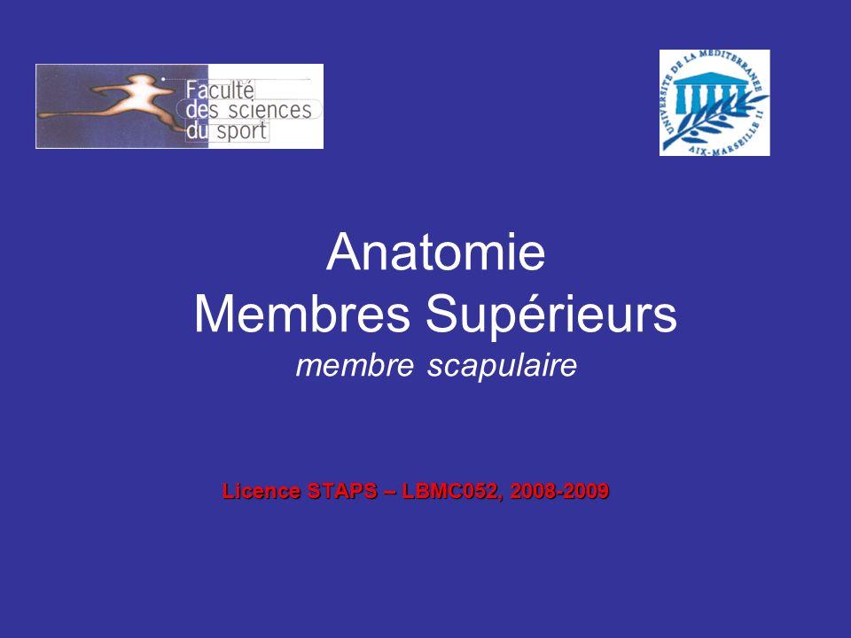 Anatomie Membres Supérieurs membre scapulaire