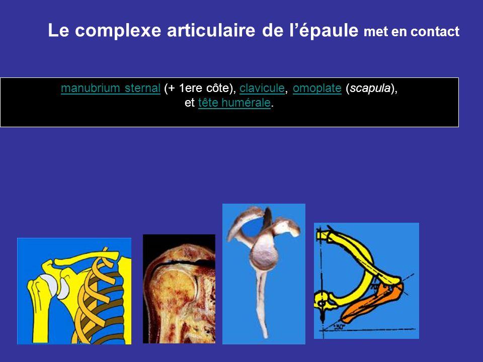 manubrium sternal (+ 1ere côte), clavicule, omoplate (scapula),
