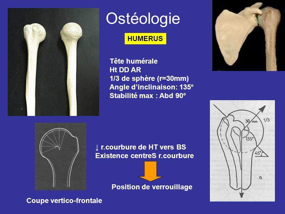Ostéologie HUMERUS Tête humérale Ht DD AR 1/3 de sphère (r=30mm)