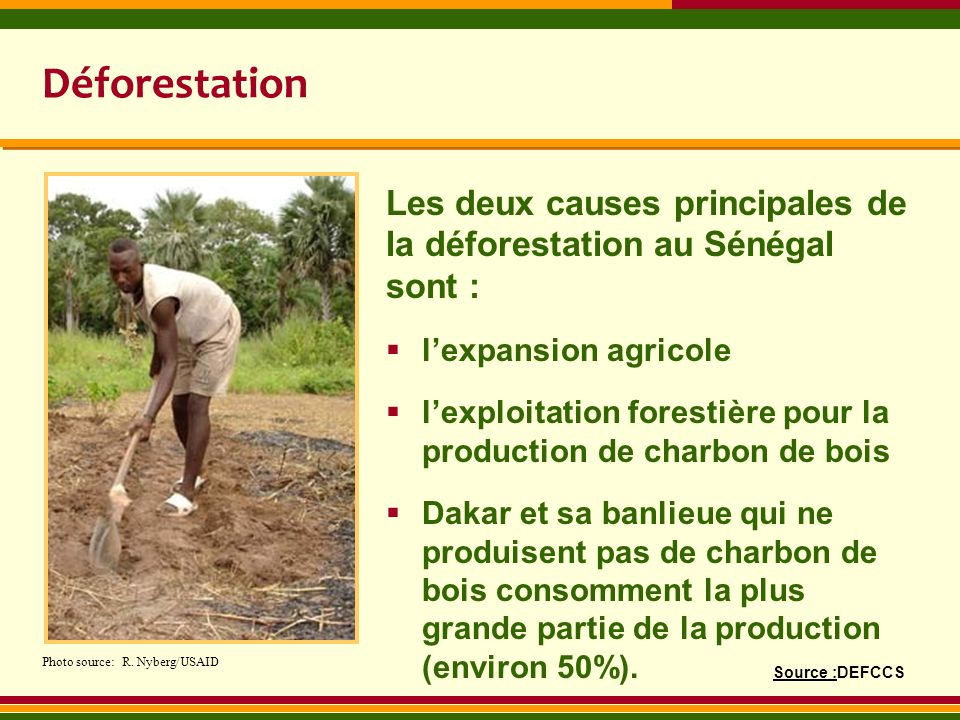 Déforestation Les deux causes principales de la déforestation au Sénégal sont : l'expansion agricole.