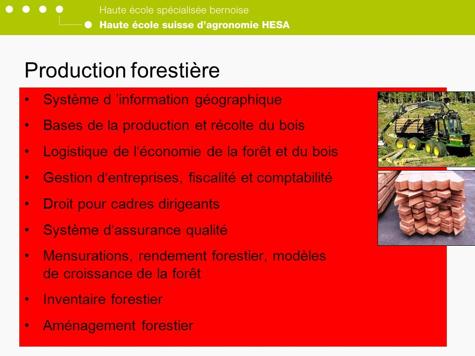 Production forestière