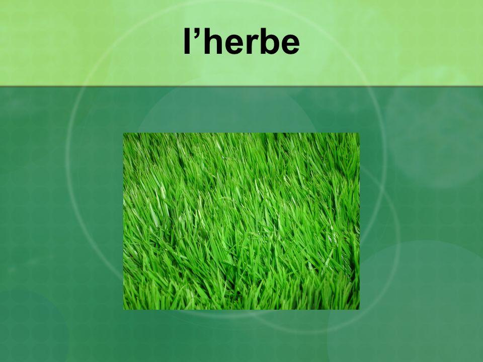 l'herbe