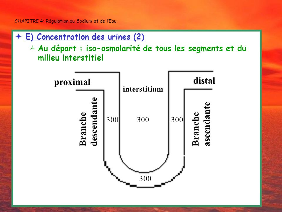 CHAPITRE 4: Régulation du Sodium et de l'Eau
