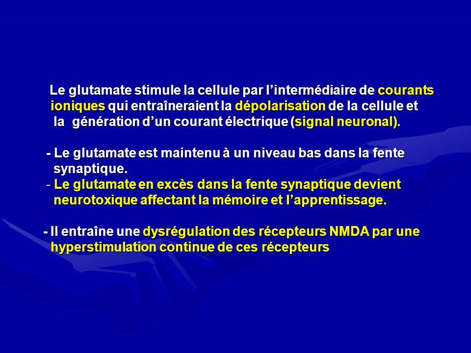 Le glutamate stimule la cellule par l'intermédiaire de courants