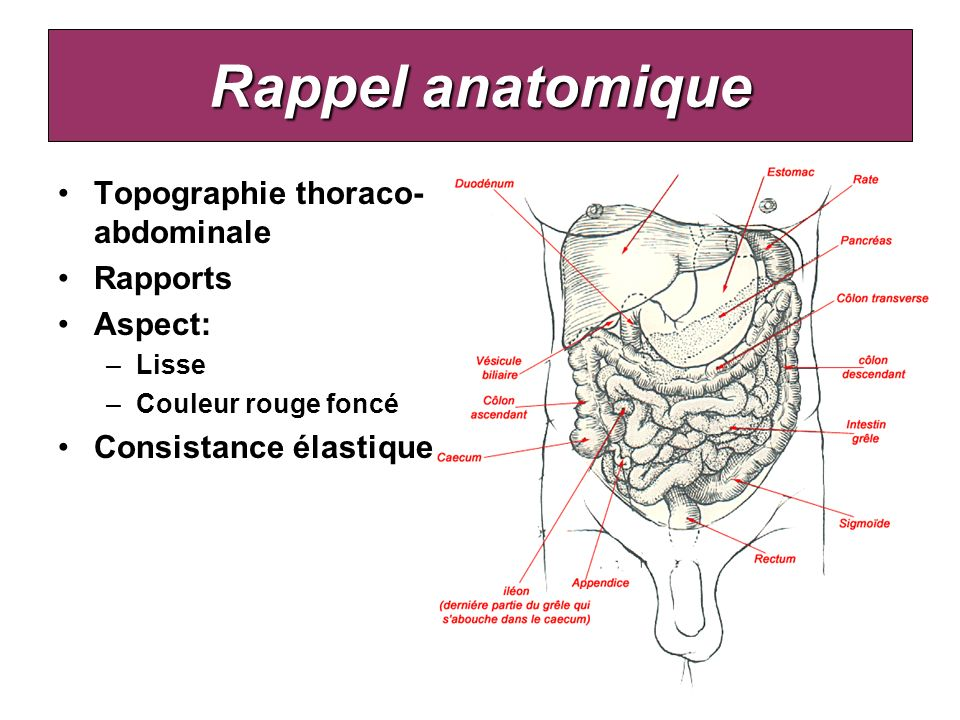 Rappel anatomique Topographie thoraco-abdominale Rapports Aspect: