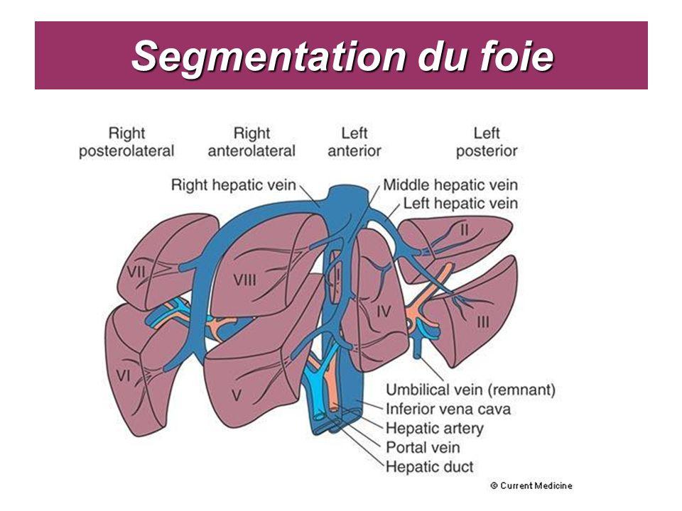 Segmentation du foie