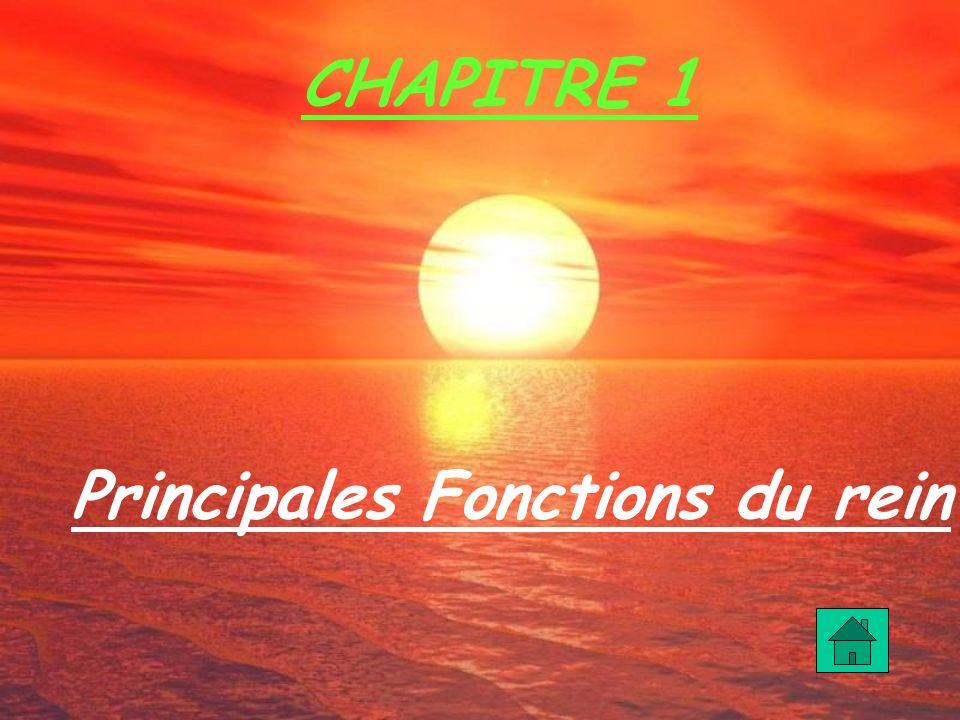 CHAPITRE 1 Principales Fonctions du rein