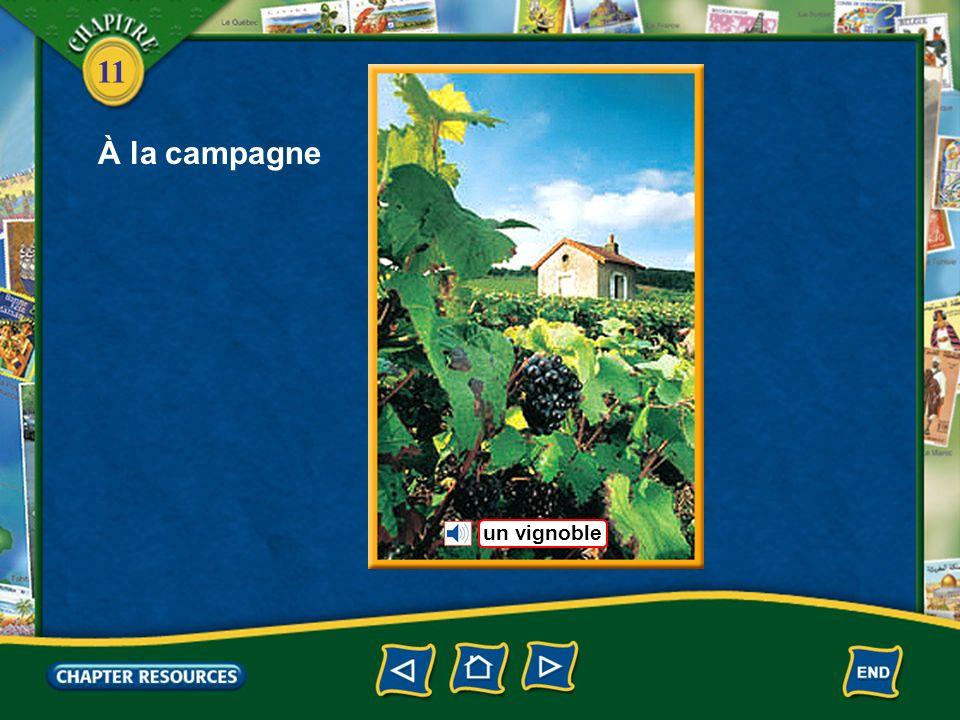 À la campagne un vignoble