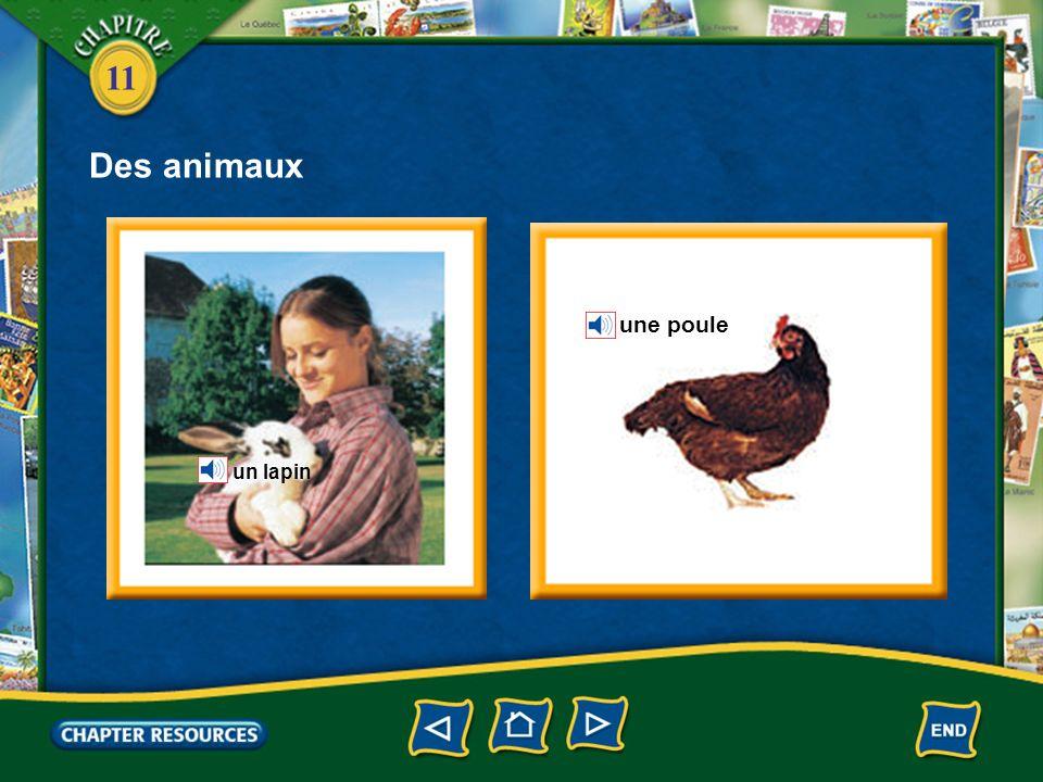 Des animaux une poule un lapin