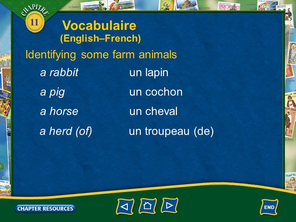 Vocabulaire Identifying some farm animals a rabbit un lapin a pig