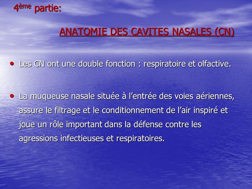 4ème partie: ANATOMIE DES CAVITES NASALES (CN)