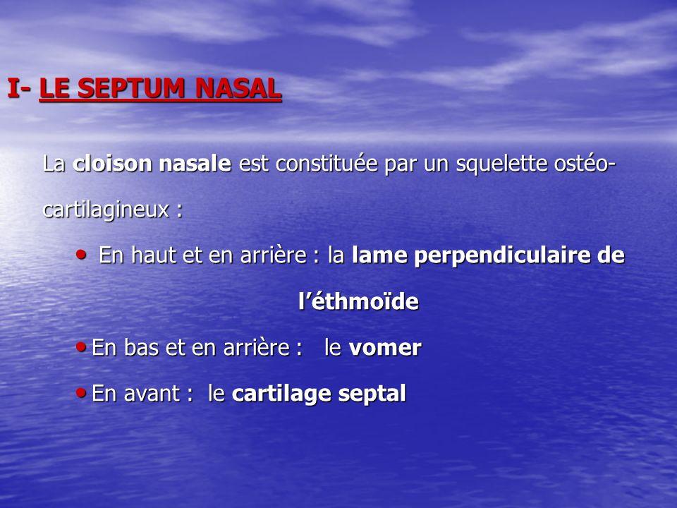 I- LE SEPTUM NASAL La cloison nasale est constituée par un squelette ostéo- cartilagineux : En haut et en arrière : la lame perpendiculaire de.