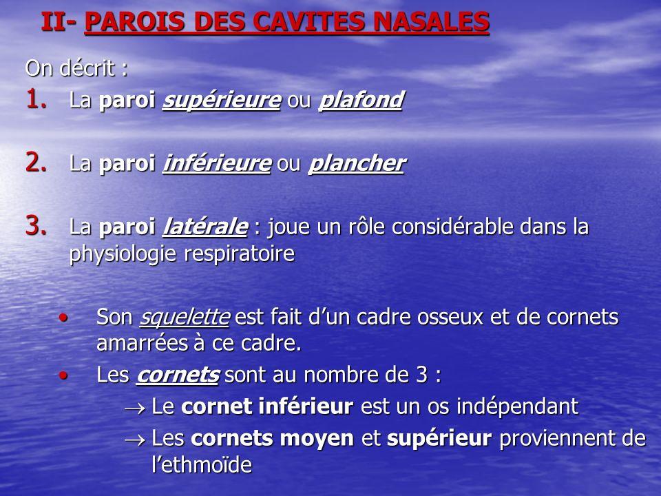 II- PAROIS DES CAVITES NASALES