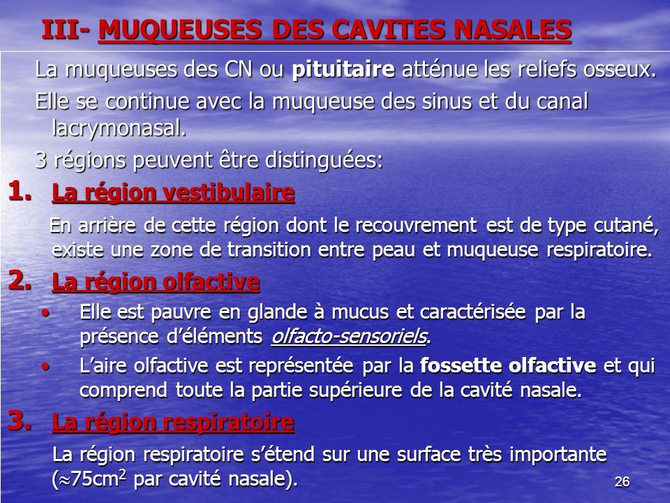 III- MUQUEUSES DES CAVITES NASALES