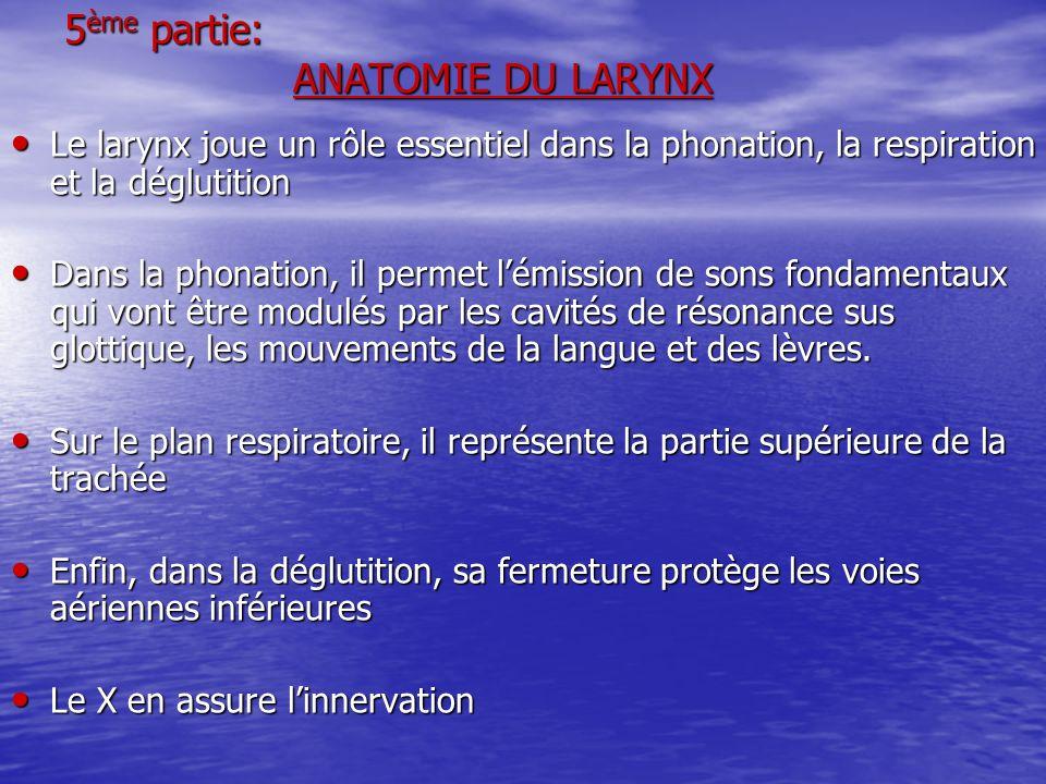 5ème partie: ANATOMIE DU LARYNX