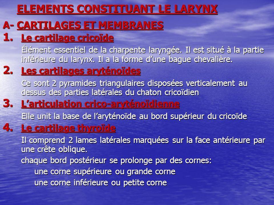 ELEMENTS CONSTITUANT LE LARYNX