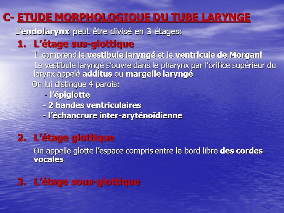 C- ETUDE MORPHOLOGIQUE DU TUBE LARYNGE