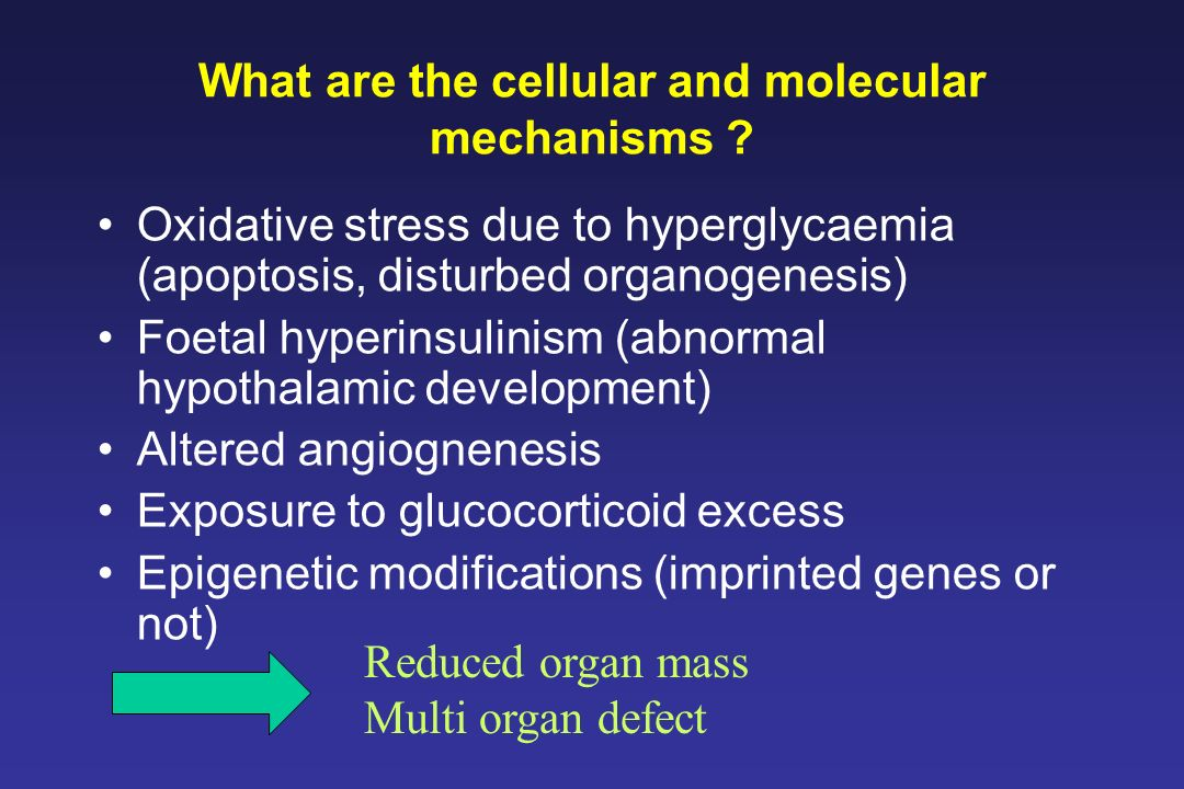 What are the cellular and molecular mechanisms