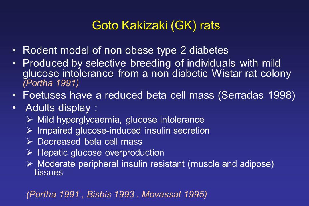 Goto Kakizaki (GK) rats