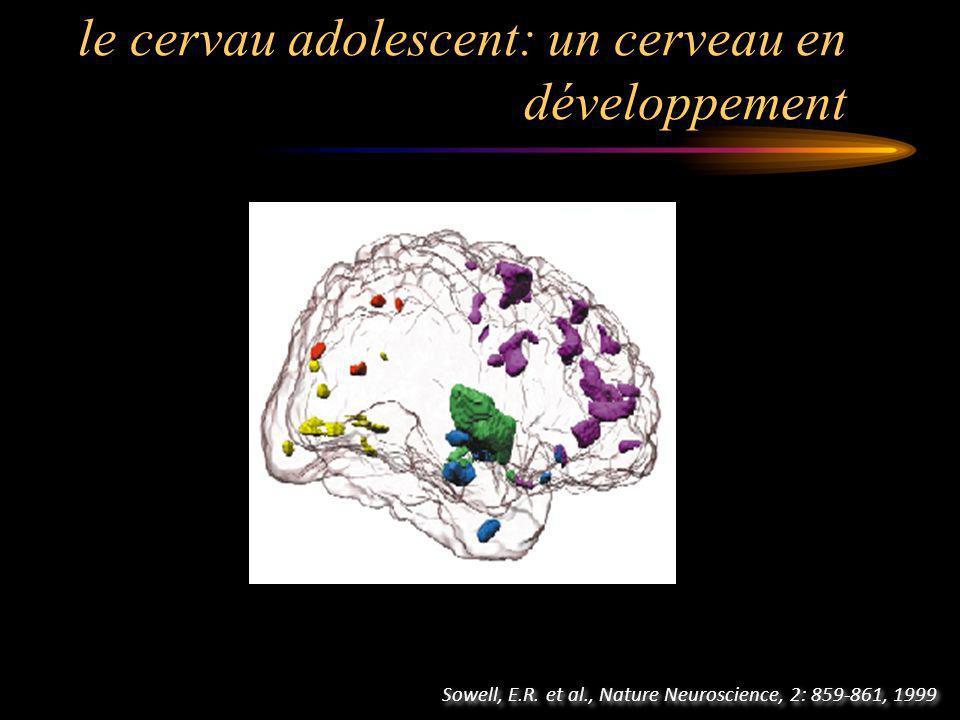 le cervau adolescent: un cerveau en développement