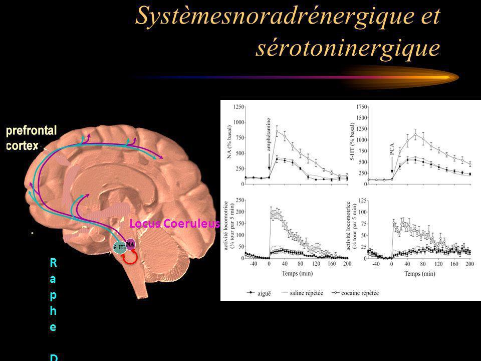 Systèmesnoradrénergique et sérotoninergique